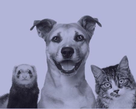 cabecera-animales[1]