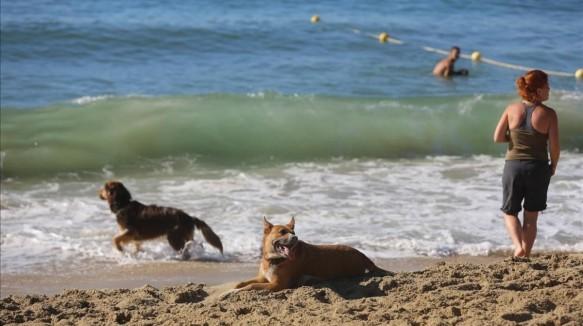 platja-gossos-1468915327020