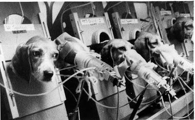 perros+cigarros+testeados+en+animales