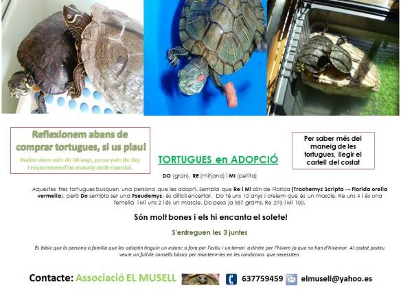 cartell tortuges