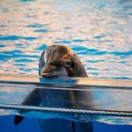 captive_dolphin.jpg.860x0_q70_crop-scale-660x330-c