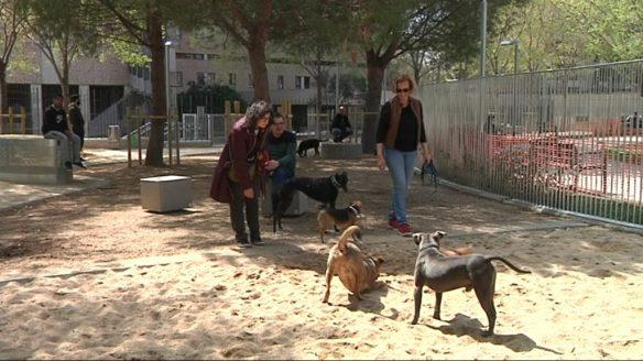 gossos-piscines-esports2-040418-1024x576