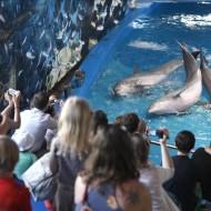 Barcelona 10 05 2012 Pabellon de los delfines Delfinarium del Zoo de Barcelona que cambiara de lugar tras la reforma aprobada Foto Josep Garcia