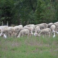 160922-visita-serradet-ovelles