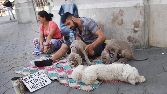 dos-los-individuos-que-utilizan-perros-como-reclamo-lucrativo-con-dos-cachorros-braco-weimar-bichon-maltes-paseo-gracia-con-gran-via-les-corts-catalanes-1535032535618