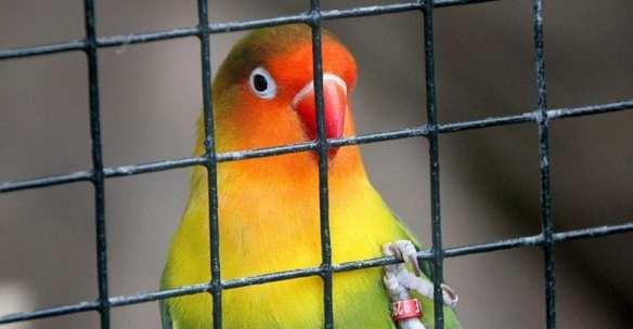 freebirds99_768x400