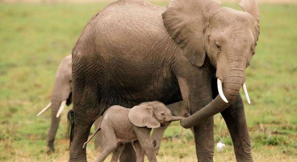 elefante_mama_cria