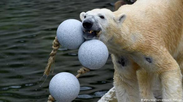 oso zoo