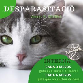 Per webside. DESPARASITACIÓ Gat (1)