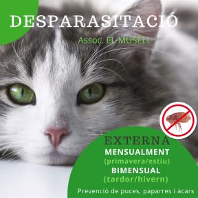 Per webside. DESPARASITACIÓ Gat