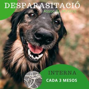 Per webside. DESPARASITACIÓ Gos (1)