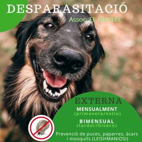Per webside. DESPARASITACIÓ Gos