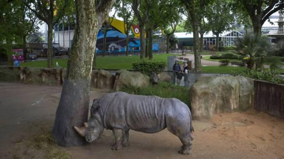 rino barcelona zoo